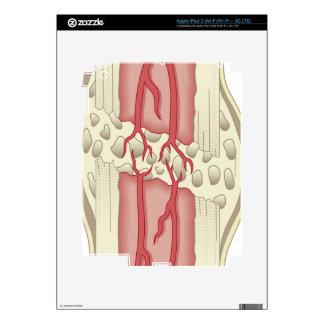 Bone Repairing Itself 2 iPad 3 Decals