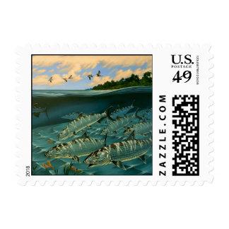 Bonefish bahía de la Florida