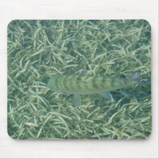 Bonefish del tizón alfombrillas de raton