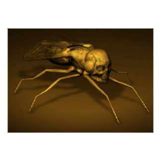 Bonehead Fly Poster