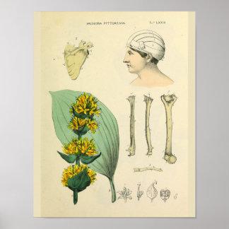 Bones Medicinal Anatomy Medical Art Print