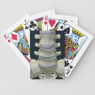 Bones of Lumbar Vertebrae 2 Bicycle Playing Cards