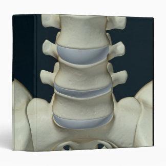 Bones of Lumbar Vertebrae 2 Binder