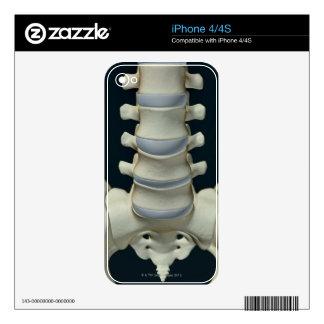 Bones of Lumbar Vertebrae 2 Decal For The iPhone 4S