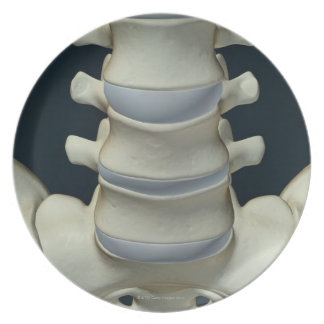 Bones of Lumbar Vertebrae 2 Dinner Plate