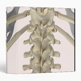 Bones of Lumbar Vertebrae 3 Binder