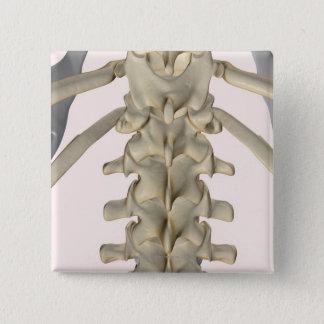 Bones of Lumbar Vertebrae 3 Button