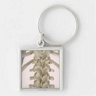 Bones of Lumbar Vertebrae 3 Keychain