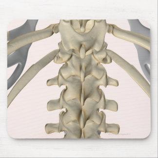 Bones of Lumbar Vertebrae 3 Mouse Pad