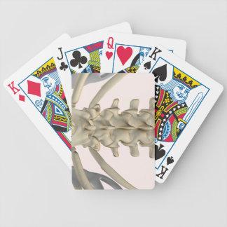 Bones of Lumbar Vertebrae 3 Playing Cards