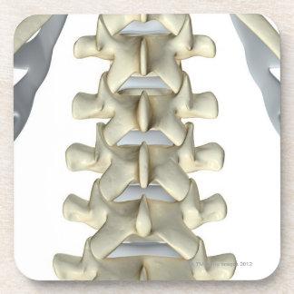 Bones of Lumbar Vertebrae Beverage Coaster