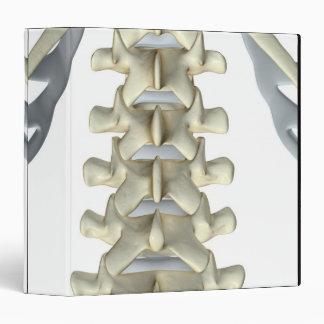 Bones of Lumbar Vertebrae Binder