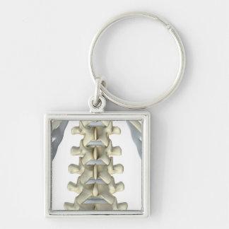Bones of Lumbar Vertebrae Keychain