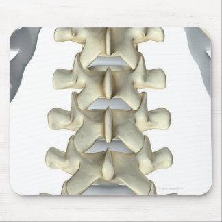 Bones of Lumbar Vertebrae Mouse Pad