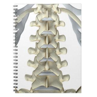 Bones of Lumbar Vertebrae Notebook