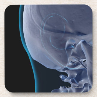 Bones of the Face 2 Beverage Coaster