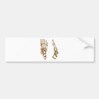 Bones of the feet - sepia bumper sticker
