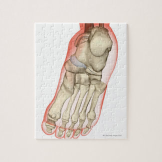 Bones of the Foot 11 Jigsaw Puzzle