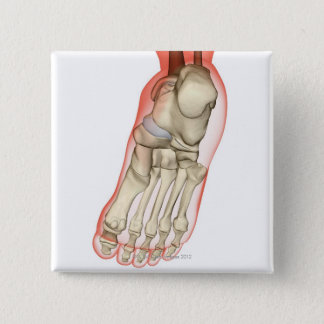 Bones of the Foot 11 Pinback Button