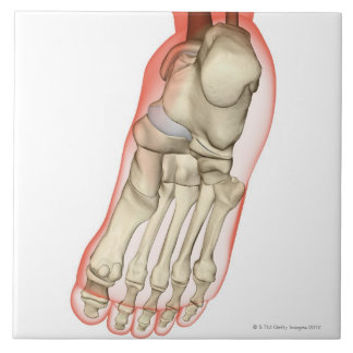 Bones of the Foot 11 Large Square Tile
