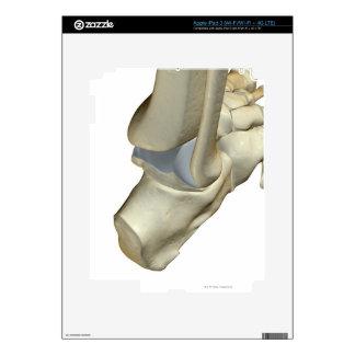 Bones of the Foot 12 Decals For iPad 3