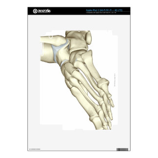 Bones of the Foot 13 Decal For iPad 3