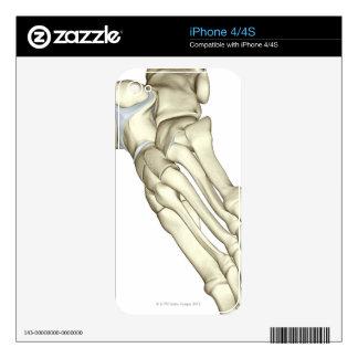 Bones of the Foot 13 Skin For iPhone 4