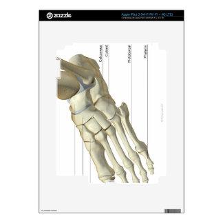 Bones of the Foot 15 iPad 3 Skin