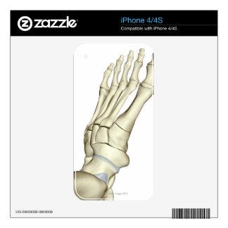 Bones of the Foot 2 Decals For iPhone 4S