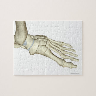 Bones of the Foot 2 Jigsaw Puzzle