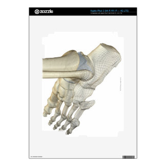 Bones of the Foot 3 Decal For iPad 3