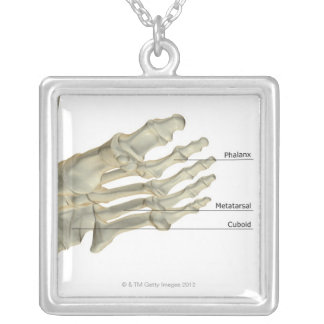 Bones of the Foot 4 Silver Plated Necklace