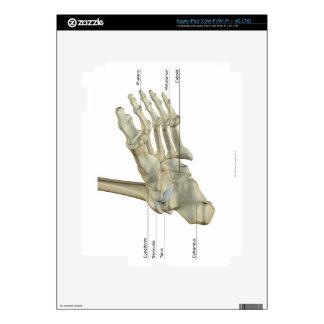 Bones of the Foot 4 Skin For iPad 3