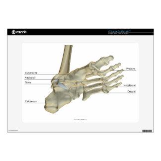 Bones of the Foot 4 Skins For Laptops