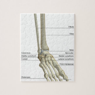 Bones of the Foot 6 Jigsaw Puzzle