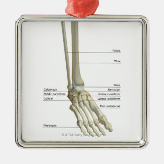 Bones of the Foot 6 Metal Ornament