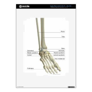 Bones of the Foot 6 Skin For iPad 3