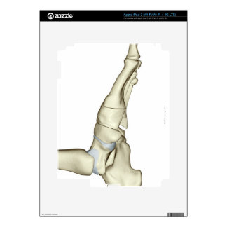 Bones of the Foot 7 Decal For iPad 3