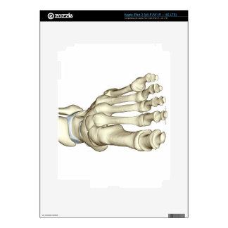 Bones of the Foot 8 iPad 3 Decals
