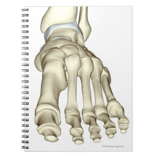 Bones of the Foot 8 Notebook