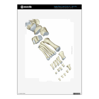 Bones of the Foot 9 Decal For iPad 3