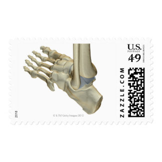 Bones of the Foot Postage Stamp