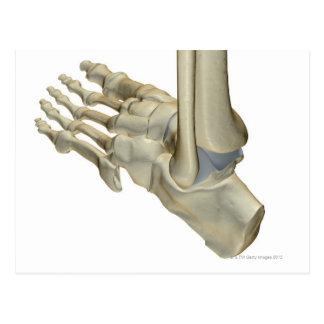 Bones of the Foot Postcard