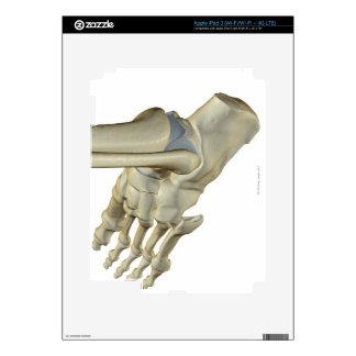 Bones of the Foot iPad 3 Decal