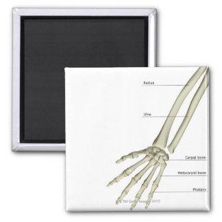Bones of the Forearm Fridge Magnets