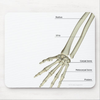 Bones of the Forearm Mouse Pad