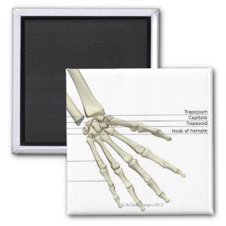 Bones of the Hand Magnet