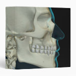 Bones of the Head and Face 2 Binders