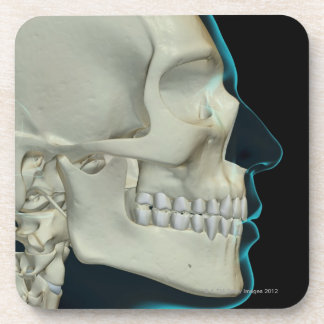 Bones of the Head and Face 2 Drink Coaster