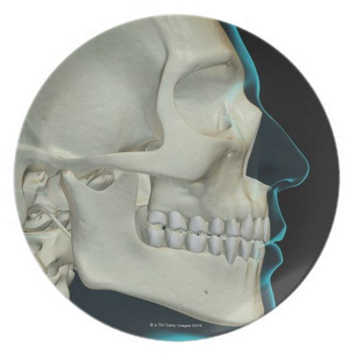 Bones of the Head and Face 2 Dinner Plates